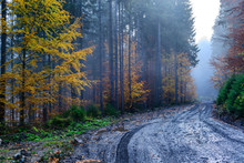 Autumn Forest With Dirt Road High In The Mountains