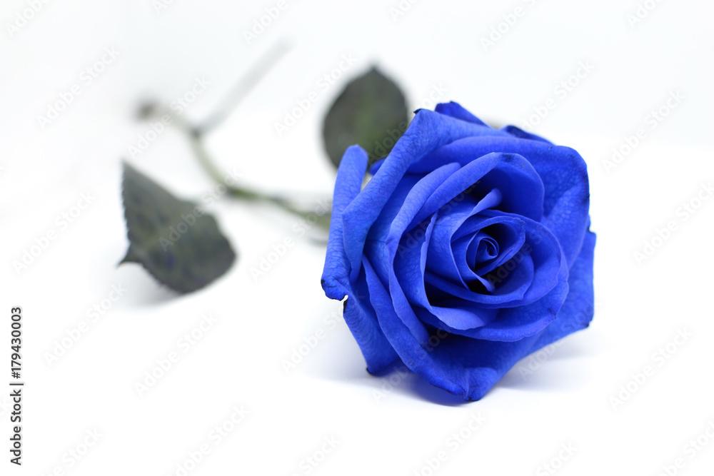 Fiore Di Una Rosa Blu Isolata Su Sfondo Bianco Fotografia Obraz Na
