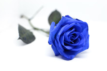 Fiore Di Una Rosa Blu Isolata ...