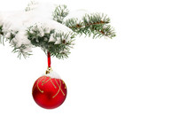 Sprig Of Christmas Tree (spruce Picea Pungens) With Of Hanging Ball Covered Hoarfrost And In Snow On A White Background With Space For Text