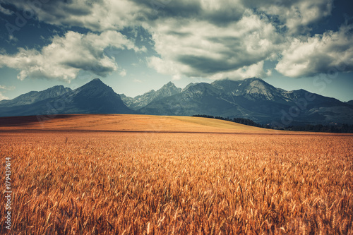 Foto auf Gartenposter Gebirge Harvested Wheat Field Under West Tatras, Slovakia. Mountain range and cloudy blue sky in the background. Nature landscape. Travel, holiday, hiking, sport, recreation. Vintage retro toning filter