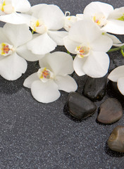 Fototapeta Storczyki Still life with spa stones and white orchid.