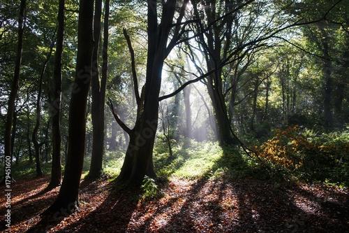 Deurstickers Herfst Sunshine in green forest