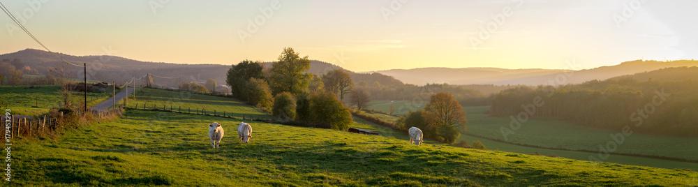 Fototapeta panorama d'un coucher de soleil sur la campagne avec des vaches dans un pré et des montagnes au fond