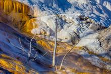Yellowstone NP, Mammoth Hot Sp...