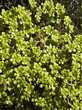 Vegetation Kanaren