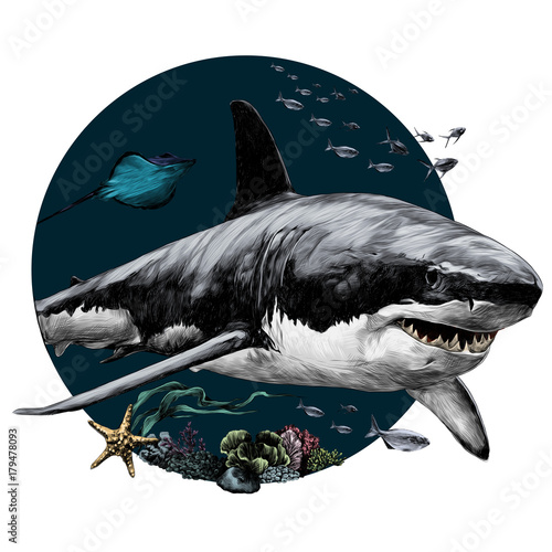 shark sketch for t-shirt vector graphics color picture Wallpaper Mural