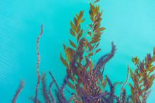 Seaweed Floating On Water