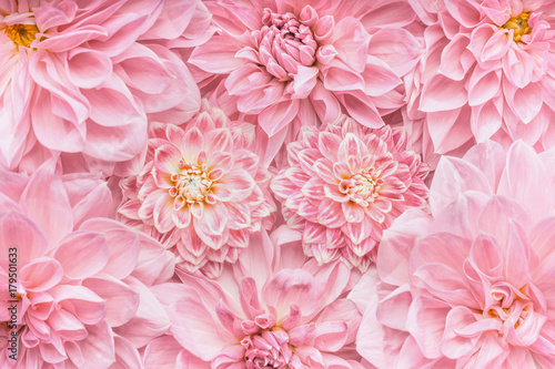 Recess Fitting Floral Pastel pink flowers background, top view, Layout or greeting card for Mothers day, wedding or happy event