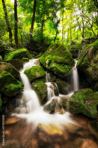 Fototapety, obrazy: lush mossy creek