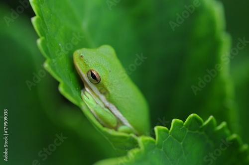 Tuinposter Kikker leaf
