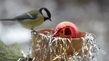 Birds In The Christmas Manger