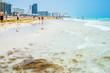 Miami beach scene. Florida. Paradise