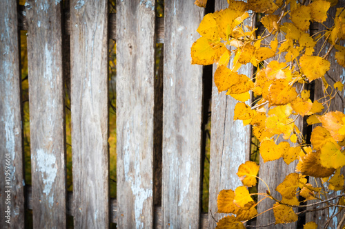 Garden Poster Floral horizontal background image of an old wood plank fence with peeling paint and golden fall leaves hanging over the edge on one side great for greeting card idea.