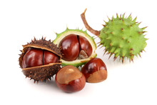 Chestnut In The Skin Isolated ...