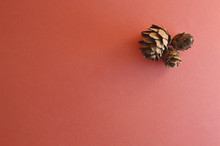 Three Little Conifer Cones On Pink Background