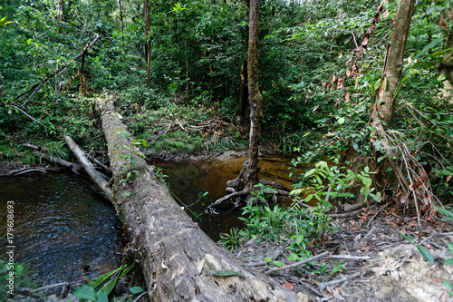 La nature nous offre le passage entre les deux rives de la crique Coco au milieu Poster Mural XXL