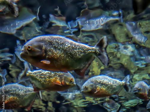 Fotobehang fish