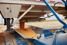 Close Up Of Cereal Grain Pouring From Hopper