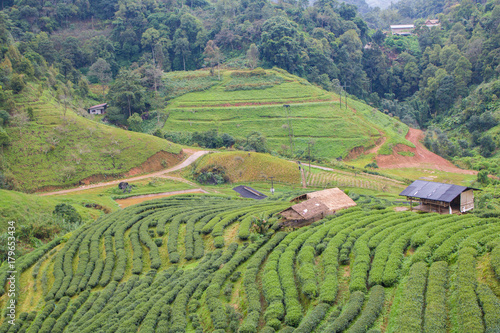 Printed kitchen splashbacks Khaki agriculture on the hill In the Rainy season with blue Cloud sky background