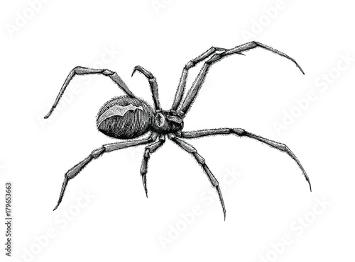 Black Widow Spider Hand Drawing Buy This Stock Vector And
