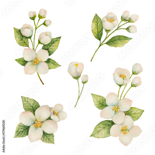 Stampa su Tela Watercolor set of flowers and branches Jasmine isolated on a white background