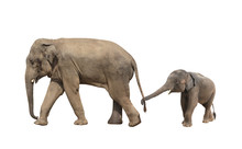 Walking Family Of Elephant - M...