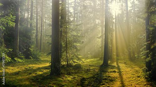 jesień w lesie - fototapety na wymiar