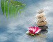 stones and lotus flower on water close up