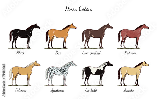 Horse color chart set. Equine coat colors with text. Types ...