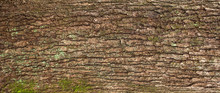 Relief Texture Of The Brown Ba...