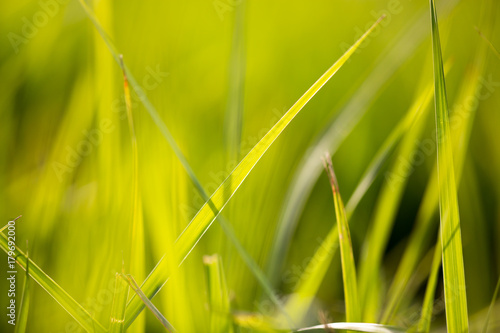green grass in the park as a background #179692000