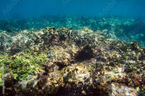 Staande foto Koraalriffen Coral reef close up