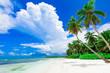 resort beach palm tree sea