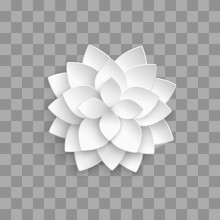 White Paper 3d Lotus Isolated ...