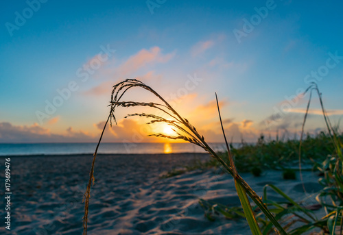 close up of sea grass growing on a sand dune with morning sky in the background