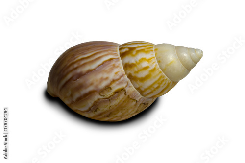 Canvastavla Beautiful sea shell. Shell of an ancient sea mollusk