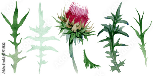 Canvas Print Wildflower thistle flower in a watercolor style isolated