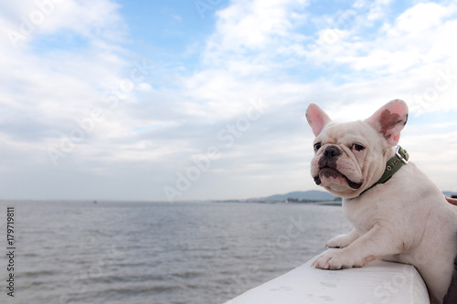 French bulldog is doing excercise at seaside road in the morning.