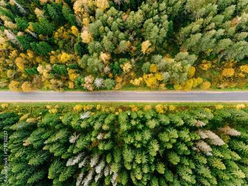 droga-w-jesien-lasowym-widok-z-lotu-ptaka
