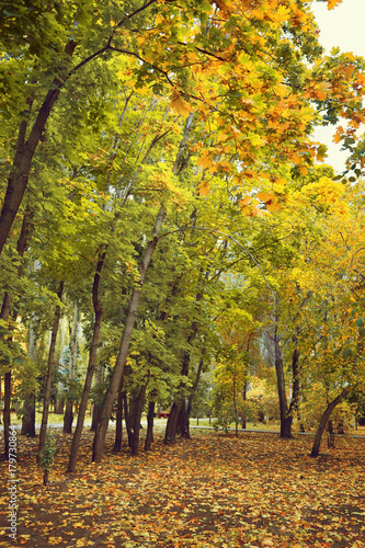 Autumn trees are Maples with yellow and Green leaves Wallpaper Mural