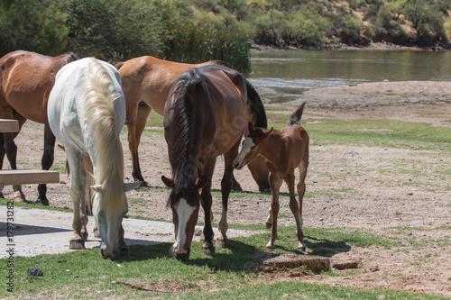 Photo  wild horse picnic