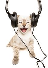 Gattino Ascolta La Musica Nell...
