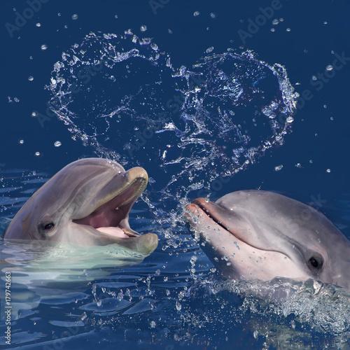 Zwei Delphine im Wasser mit Wassertropfen in Herzform