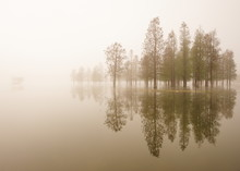 Flooded Trees In A Fog At Sunr...