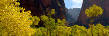Upper Zion Canyon Fall Color
