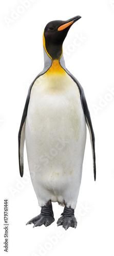 King penguin isolated on white
