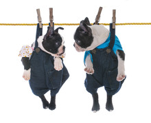 Two Puppies Hanging On The Clo...