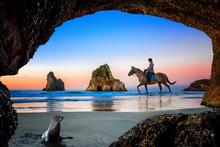 View From The Cave Of Wharariki Beach With House Rider And Wildlife Nature Seal Watching Closely, The Place Popular For Tourist In Summer, Vacation And Holidays, Locate In Topest Of South New Zealand