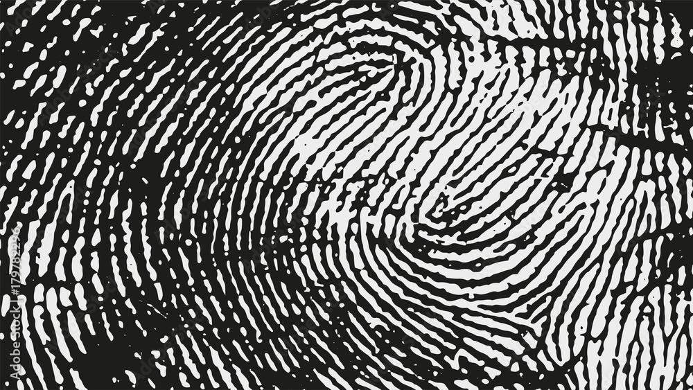 Fototapeta Original fingerprint pattern. Black stripes on white background.